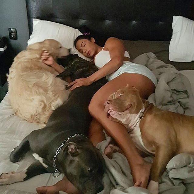 ADOTE BICHO Adoção e Doação de Animais em Curitiba Cães