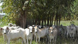 Campanha de vacinação contra aftosa espera imunizar 102 mi de animais
