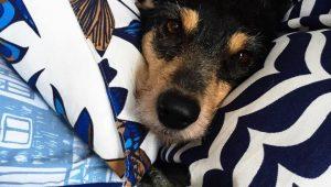 Resgatei um cão e o deixei no hotel; posso visitá-lo com frequência?