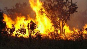 Ferramenta em plataforma do INPE irá ajudar no combate a queimadas em todo o País