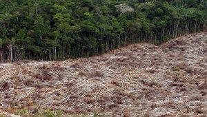 Ao falar da Amazônia, Temer tentou amenizar imagem do Brasil, diz secretário do Observatório do Clima