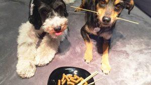 Seu cão não come ração? Saiba o que fazer para mudar isso
