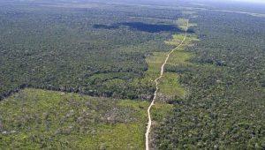 Diante de eleição imprevisível, Amazônia parece vulnerável mais uma vez, aponta jornal londrino