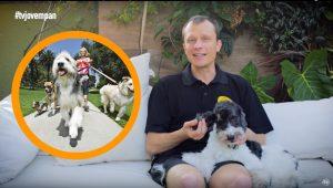 Pet na Pan #37: 3 dicas para escolher um passeador para seu cachorro