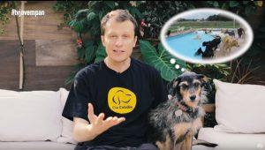 Pet Na Pan #33 – Três dicas para que seu cão não fique estressado fora de casa