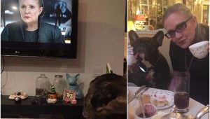 "Cachorro de Carrie Fisher assiste trailer de ""Star Wars"""