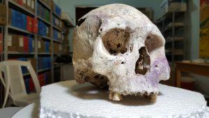 Crânio de indígena que viveu há mil anos no MT será reconstruído