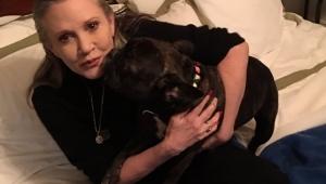 """Cão de Carrie Fisher reconheceu a atriz ao assistir """"Os Últimos Jedi"""""""