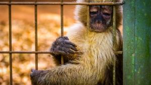 Capital paulista já teve 105 mortes de macacos; zona norte lidera