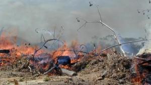 Fumaça de queimadas na Amazônia pode causar câncer