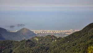 Rio investiga mortes de quatro macacos na Floresta da Tijuca
